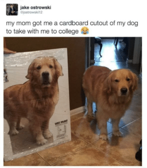 positive-memes:  Clever title: jake ostrowski  jostrowski12  my mom got me a cardboard cutout of my dog  to take with me to college positive-memes:  Clever title