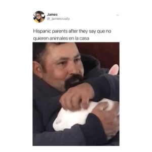 Seriously 😂😂😂⁣: James  @_jamiecrusty  Hispanic parents after they say que no  quieren animales en la casa Seriously 😂😂😂⁣