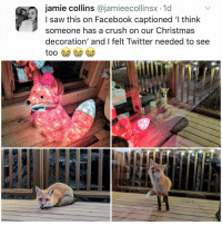 Christmas, Crush, and Facebook: jamie collins @jamieecollinsx -1d  I saw this on Facebook captioned 'l think  someone has a crush on our Christmas  decoration' and I felt Twitter needed to see Post 1802: 🦊 ❤️