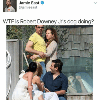 What in the world!!!: Jamie East  ajamieeast  WTF is Robert Downey Jr's dogdoing? What in the world!!!