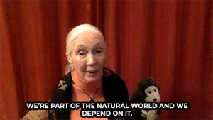 Jane Goodall believes treating every day as Earth Day is essential.: Jane Goodall believes treating every day as Earth Day is essential.