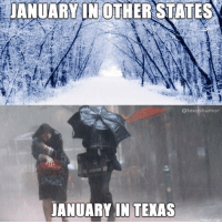 Texas, All of The, and Puddle: JANUARY IN OTHER STATES  atexashumor  JANUARY IN TEXAS I stepped in all of the puddles this morning ☔️