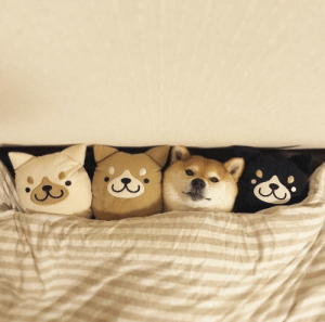 Japanese, Soldier, and Dead: Japanese soldier hides out among dead comrades (1944 colorized)