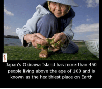 Memes, Japan, and 🤖: Japan's Okinawa Island has more than 450  people living above the age of 100 and is  known as the healthiest place on Earth