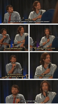 awws: Jared: Hii!  Little girl: Hi! My question is, what's your favourite animals?  Crowd and Misha awws  My favourite animal is a moose.  My favourite animal is,  has to be ponies,at this point  What's your favourite  Little girl: Vampire bats.