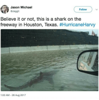 To all of the river surfers, watch out the sharks have arrived. Just as you thought things couldn't get any worse Jaws decides to show up. Damn: Jason Michael  @Jeggit  Follow  Believe it or not, this is a shark on the  freeway in Houston, Texas. #HurricaneHarvy  1:00 AM 28 Aug 2017 To all of the river surfers, watch out the sharks have arrived. Just as you thought things couldn't get any worse Jaws decides to show up. Damn