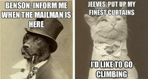 Animals, Climbing, and Funny: JEEVES, PUT UP MY  BENSON, INFORM  WHEN THE  ME  MAILMAN ISI mEİNESİCURTAINS  HERE  HDLIKETOGO  CLIMBING 30+ Funny Cat Vs. Dog Memes To Prove Who's The Boss #catmemes #dogmemes - Lovely Animals World