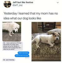 LOL mom get it together 😂: Jeff but like festive  @jeff_jssj  Yesterday I learned that my mom has no  idea what our dog looks like  Ok I saw a picture on FB that  said these two dogs were  picked up by the warden in  Grafton and it looked like him  what do you think?  That's not duey  DUEYS face is brown  Delivered  Ok - just checking LOL mom get it together 😂