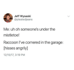 In The Garage: Jeff Wysaski  @pleatedjeans  Me: uh oh someone's under the  mistletoe!  Raccoon l've cornered in the garage:  Thisses angrily]  12/15/17, 3:19 PM