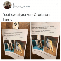 Why the hell arent u following @kalesaladanimals yet: @jegan_mones  You howl all you want Charleston,  honey  Hello, Neighbors!  name is Charleston Chew and I'm very sorry for my howling.  My  I'm an old man now, with cataracts, and sometimes I get real scared  because  I can't see where I am and can't find my mom.  AS I get used to my new place, I will start to settle down.  Thanks for being patient with me. 1 don't mean to be such a pain.  Hello, Neighbors!  Charleston Chew Pug  Apt 502  is Charleston Chew and I'm very sorry for my howling.  My name  I'm an old man now with caar acts; and sometimes I get real scared  an old man now, with cataracts, and sometimes I get real scared  AS I get used to my new place, I will start to settle down.  Thanks for being patient with me. I dont mean to be such a pain.  Charleston Chew Pug  Apt 502  when I'm not howling  and being  being  bad, I like to sit nicely or take naps.  when I'm not howling  and being bad, I like to sit nicely or take naps.  being Why the hell arent u following @kalesaladanimals yet