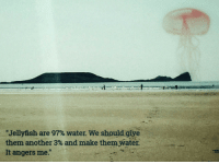 "Reddit, Water, and Another: ""Jellyfish are 97% water. We should-giye  them another 3% and make them water.  It angers me."" [Src]"