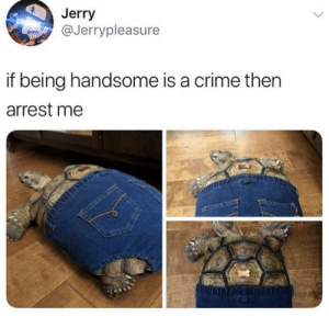 Sir you're under arrest via /r/wholesomememes https://ift.tt/2yAUFHa: Jerry  @Jerrypleasure  if being handsome is a crime then  arrest me  AS Sir you're under arrest via /r/wholesomememes https://ift.tt/2yAUFHa