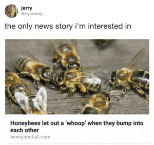 News, Target, and Tumblr: jerry  @stylestruly  the only news story i'm interested in   Honeybees let out a 'whoop' when they bump into  each other  newscientist.com tastefullyoffensive:  (via stylestruIy)