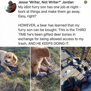 Animals, Bones, and Deer: Jesse 'Writer, Not Writer* Jordan  My idiot furry son has one job at night  bork at things and make them go away.  Easy, right?  HOWEVER, a bear has learned that my  furry son can be bought. This is the THIRD  TIME he's been gifted deer bones in  exchange for being allowed access to my  trash, AND HE KEEPS DOING IT. Dog Memes Of The Day 32 Pics – Ep52 #animalmemes #dogmemes #memes #dogs - Lovely Animals World