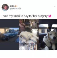 Animals, Cute, and Cute Animals: Jett  @jettrush26  I sold my truck to pay for her surgery SWIPE & TAG ❤️🍌 follow me @v.cute.animals 👈