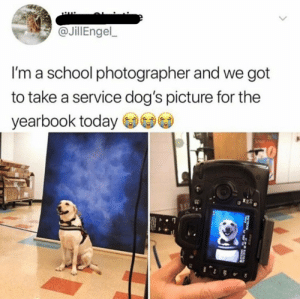 It's precious!!: @JillEngel  I'm a school photographer and we got  to take a service dog's picture for the  yearbook today It's precious!!