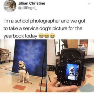 Me_irl by MussoIiniTorteIIini MORE MEMES: Jillian Christine  JillEngel  I'm a school photographer and we got  to take a service dog's picture for the  yearbook today Me_irl by MussoIiniTorteIIini MORE MEMES