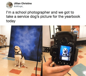 Dogs, School, and Today: Jillian Christine  @JillEngel  I'm a school photographer and we got to  take a service dog's picture for the yearbook  today Yearbook Photo!
