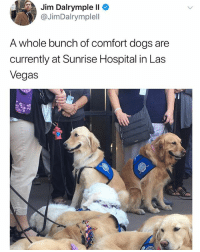 Dogs, Memes, and Twitter: Jim Dalrymple ll  @JimDalrymplell  A whole bunch of comfort dogs are  currently at Sunrise Hospital in Las  Vegas Good things needed in times of need. @x__social_butterfly__x is here to share the good. Twitter jimdalrympleii