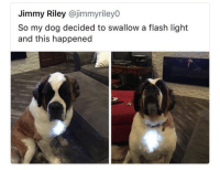 Who's dog is this?! 😂🤦‍♂️ https://t.co/PlGEv04IGy: Jimmy Riley @jimmyriley0  So my dog decided to swallow a flash light  and this happened Who's dog is this?! 😂🤦‍♂️ https://t.co/PlGEv04IGy