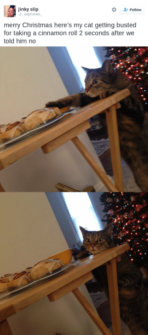 drfitzmonster: thefingerfuckingfemalefury:  WE SEE UR CRIME   HIS GUILTY LITTLE FACE OMG : jinky slip  sophocles  Follow  merry Christmas here's my cat getting busted  for taking a cinnamon roll 2 seconds after we  told him no drfitzmonster: thefingerfuckingfemalefury:  WE SEE UR CRIME   HIS GUILTY LITTLE FACE OMG