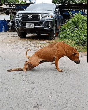 This cheeky dog faked a leg injury all for some attention 😂😂: JNILAD  2A 4789  NEWSELARE. This cheeky dog faked a leg injury all for some attention 😂😂