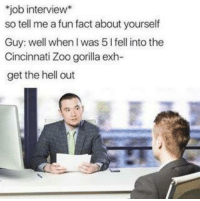 Cincinnati Zoo Gorilla: job interview  so tell me afun fact about yourself  Guy: well when was 5 l fell into the  Cincinnati Zoo gorilla exh-  get the hell out