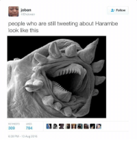 Harambe, Who, and Still: joban  Follow  EhJovan  people who are still tweeting about Harambe  look like this  RETWEETSLIKES  309  784  6:30 PM-13 Aug 2016 https://t.co/hvZkpsPhv3