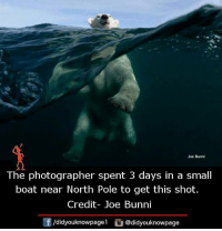 Memes, Boat, and 🤖: Joe Bunni  The photographer spent 3 days in a small  boat near North Pole to get this shot.  Credit- Joe Bunni  f /didyouknowpagel  Cu  @didyouknowpage