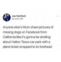 """Dogs, Facebook, and Memes: Joe Hartford  @JoeH_96  Anyone else's Mum share pictures of  missing dogs on Facebook from  California like it's gonna be strolling  about Halton Tesco car park with a  plane ticket strapped to its forehead ATTENTION do NOT follow @menshumor if you're easily offended"""""""