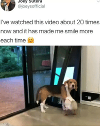 Memes, Smile, and Time: Joev Sutera  @joeysofficial  l've watched this video about 20 times  now and it has made me smile more  each time Cuteness overload