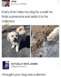 Memes, Time, and Thought: Joey  @L Dont SWERE  Every time l take my dog for a walk he  finds a pinecone and adds it to his  collection  ACTUALLY RICK JAMES  @BigGloHendrix  I thought your dog was a demon 😂Wow