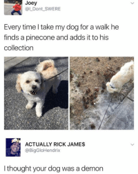 Puppies, Free, and Time: Joey  @LDont SWERE  Every time l take my dog for a walk he  finds a pinecone and adds it to his  collection  ACTUALLY RICK JAMES  @BigGloHendrix  l thought your dog was a demon follow @iamathicchotdog for free puppies 🐶