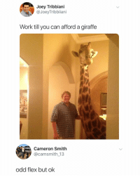Flexing, Joey Tribbiani, and Shit: Joey Tribbiani  @JoeyTribbiiani  Work till you can afford a giraffe  Cameron Smith  @camsmith 13  odd flex but ok Shout out to Jeffrey for getting his shit together