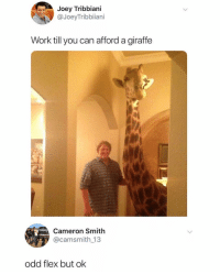 Flexing, Funny, and Joey Tribbiani: Joey Tribbiani  @JoeyTribbiiani  Work till you can afford a giraffe  Cameron Smith  @camsmith 13  odd flex but ok Odd but also a legendary flex.