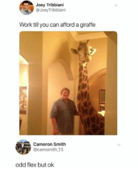 Dank, Flexing, and Joey Tribbiani: Joey Tribbiani  @JoeyTribbiiani  Work till you can afford a giraffe  Cameron Smith  @camsmith 13  odd flex but ok