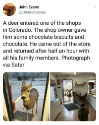 Deer, Family, and Memes: John Evans  @Distinctboxes  A deer entered one of the shops  in Colorado. The shop owner gave  him some chocolate biscuits ang  chocolate. He came out of the store  and returned after half an hour with  all his family members. Photograph  via Satar Always welcome.