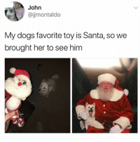@hilarious.ted is my favorite animal memes page: John  @jjmontaldo  My dogs favorite toy is Santa, so we  brought her to see him @hilarious.ted is my favorite animal memes page