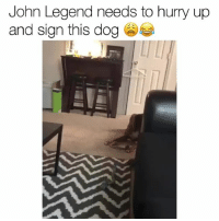 Beautiful, Funny, and John Legend: John Legend needs to hurry up  and sign thisdog This is beautiful 😂