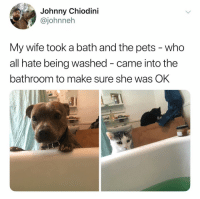 Pets, Wife, and Dank Memes: Johnny Chiodini  @johnneh  My wife took a bath and the pets - who  all hate being washed - came into the  bathroom to make sure she was OK The wholesome content we crave