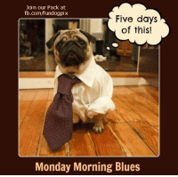 Join our Pack at  fb.com/fundogpix  Five days  of this!  Monday Morning Blues Monday Morning Blues - Five Days of This    BOL  #dog