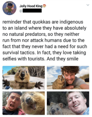 Hopefully this brightened your day! via /r/wholesomememes http://bit.ly/2G6DSjU: Jolly Hood King  reminder that quokkas are indigenous  to an island where they have absolutely  no natural predators, so they neither  run from nor attack humans due to the  fact that they never had a need for such  survival tactics. In fact, they love taking  selfies with tourists. And they smile Hopefully this brightened your day! via /r/wholesomememes http://bit.ly/2G6DSjU