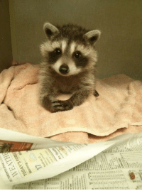 joosh-actual: awwcutepets:  Moment of your time?  A B S O L U T E L Y : joosh-actual: awwcutepets:  Moment of your time?  A B S O L U T E L Y