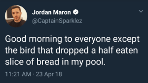 me irl by AaronToaster FOLLOW 4 MORE MEMES.: Jordan Maron  @CaptainSparklez  Good morning to everyone except  the bird that dropped a half eaten  slice of bread in my pool.  11:21 AM 23 Apr 18 me irl by AaronToaster FOLLOW 4 MORE MEMES.