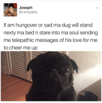 Funny, Cheers, and Hungover: Joseph  aVIVIa  If am hungover or sad ma dug will stand  nexty ma bed n stare into ma soul sending  me telepathic messages of his love for me  to cheer me up Goals | More 👉 @lei.ying.lo