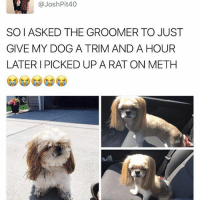 (@friendofbae ) is one of the funniest pages on IG: @Josh Pit 40  SOIASKED THE GROOMER TO JUST  GIVE MY DOG A TRIM AND A HOUR  LATER I PICKED UP A RAT ON METH (@friendofbae ) is one of the funniest pages on IG