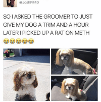 Don't make fun of my drug addicted rat. @_theblessedone Twitter joshpit40: @Josh Pit 40  SOIASKED THE GROOMER TO JUST  GIVE MY DOG A TRIM AND A HOUR  LATER I PICKED UP A RAT ON METH Don't make fun of my drug addicted rat. @_theblessedone Twitter joshpit40