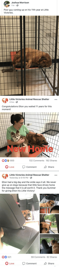 Dogs, Love, and Tumblr: Joshua Morrison  Poor guy coming up on his 11th year at Little  Victories   Little Victories Animal Rescue Shelter...  4 hrs  Congratulations Elton you waited 11 years for this  moment!  New Home  0 800  132 Comments 182 Shares  OLove  Comment  Share   Little Victories Animal Rescue Shelter  Yesterday at 9:19 PM.  Elton had a big day and the smile says it all. We never  give up on dogs because that little face drives home  the message that it is all worth it. Thank you Summer  for giving Elton his Little Victory!  521  59 Comments 82 Shares  Love Comment  Share hotboyproblems:  the happy ending he deserved