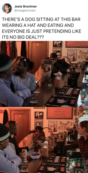 babyanimalgifs: He's had a rough day Did you mean a ruff day?: Josie Brechner  @visagermusic  THERE'S A DOG SITTING AT THIS BAR  WEARING A HAT AND EATING AND  EVERYONE IS JUST PRETENDING LIKE  ITS NO BIG DEAL???   Fries or Tots  side w/hot dog 3  small basket.$4  large basket  ALCOHOL  Hot Dog  HOT DO  15   Corn Dog  Wedge Salad. 6.  ฉีacar, rornate. Onian, awu@f Ranch  Fries or Tots  side w/hot dog 3  small basket  .,'4,4  large basket  6.se  ALCOHOL  Hot Dog  HOT DOGS  15  licid babyanimalgifs: He's had a rough day Did you mean a ruff day?