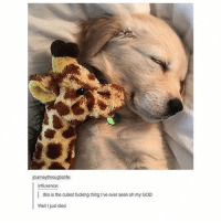 Fucking, Journey, and Memes: journey throughalife:  influxence:  this is the cutest fucking thing I've ever seen oh myGOD  Well, I just died I'm dead 😍💕